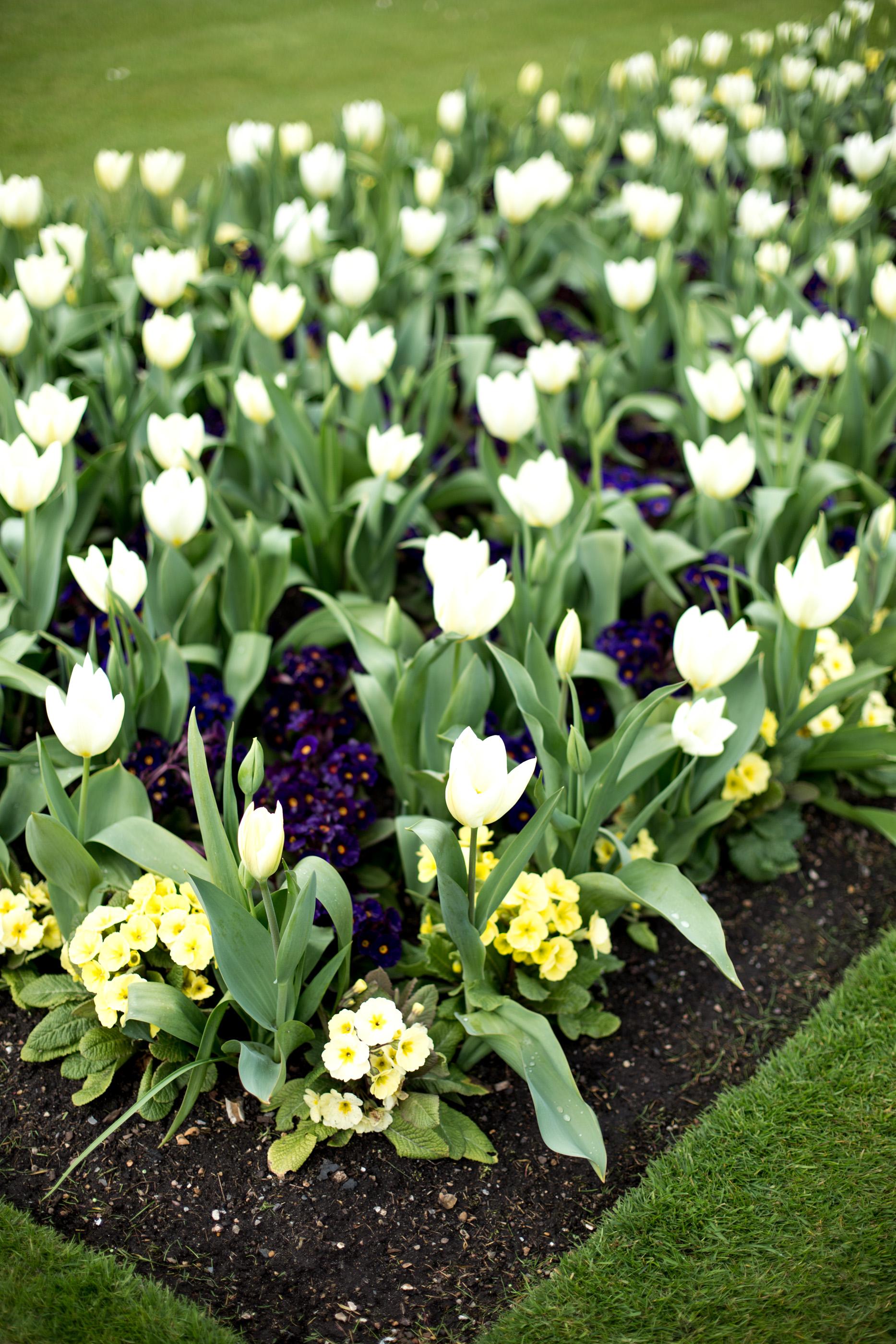 mediamarmalade Kew Gardens Guide