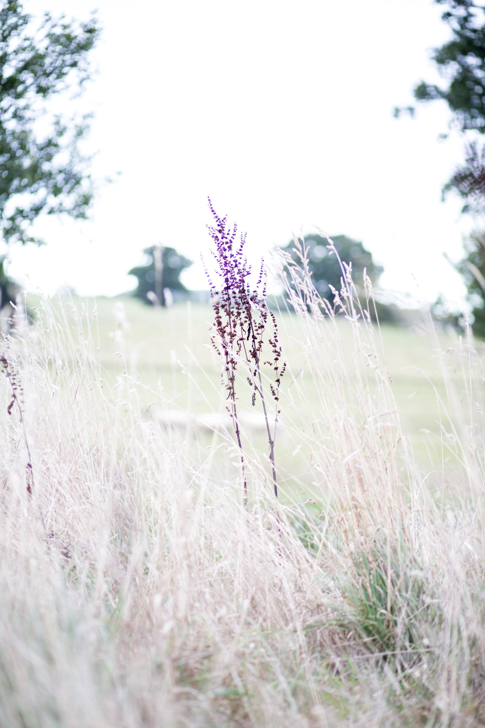 mediamarmalade_wilderness_reserve-220